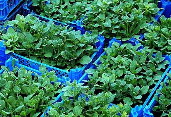 DIY IOT Garden nursery