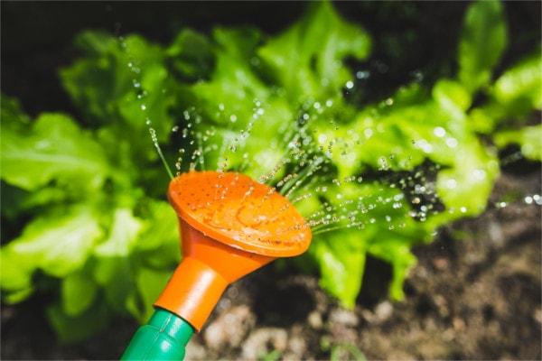 DIY IOT Garden self-watering